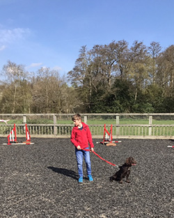 Dog Training Gallery